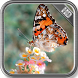 Butterfly Wallpaper by PhoenixWallpapers