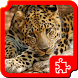 Big cats Puzzles by Dimax Puzzles
