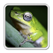 Little frog Live Wallpaper by Rikard Tuins