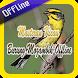 Masteran Kicau Burung Mozambik Offline