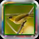 Master Pleci|Kicau Burung mp3 by Tone best app.Inc