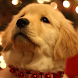 dog cute puppy wallpapers by best wallpaper inc