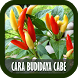Cara Budidaya Cabe by Dendroid