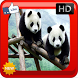 Cute Panda Wallpapers by Yolann