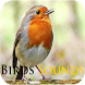 Birds Sounds by Playstore Sounds Inc