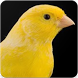 Canary Sound : Canary Songs and Canary Singing