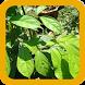Heilkräuter - Heilpflanzen by PKML
