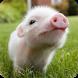 Farm Animals Sound by App For My Kids