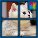 Cat Jigsaw Puzzles Free by FREEDOM GAMES