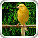 Singing Canary Master by JSapp