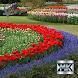 Виды садовых цветов by МобКиоск1