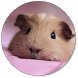 Hamster Wallpapers by Recci