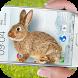 Bunny in Phone Cute joke by Just4Fun