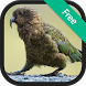 New Zealand Bird Songs