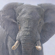 live elephant wallpaper by ashwin.gamedev
