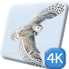 Flying Owl 4K Live Wallpaper by Wallpaper Number One