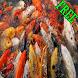 Cara Lengkap budidaya Ikan by BerkahMadani