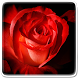 Rose Flower Live Wallpaper by Art LWP