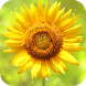 Sunflower Wallpapers by Dabster Software