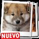 Imagenes de perros fondos de perritos y cachorros by Appsamimanera
