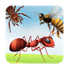 Insects Learning Flashcards by Walter Technologies