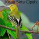 Kicau Sirtu Cipoh Terbaru by Tidut app