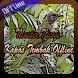 Master Kicau Kapas Tembak Offline by ayuki apps