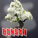 Bonsai Tanaman Hias Unik by seemala