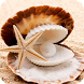 Seashells Live Wallpaper by Empire Wallpapers