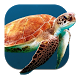 Turtle Underwater Live WP by Super Puper