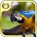 Bird Species Quiz HD by Mangata Media