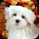 Dog Wallpaper Ringtone by Speed Wallpaper Ringtone
