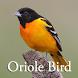 Oriole Bird Sounds by Scorpion King
