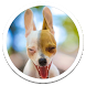 Funny Dog Live Wallpaper by Sub Nation