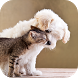 Dogs and Cats Wallpapers by Leeway Infotech LLC