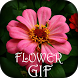 Flower GIF Collection by Funny Mouse & Snake