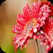 Flower wallpapers by Wisesoftware