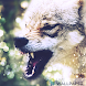 Wolf live wallpaper by Creative apps and wallpapers