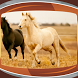 Horses Live Wallpapers by Compass Live Wallpapers