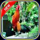 Masteran Ayam Ketawa Si Jawara by Panji Lor