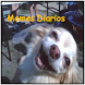 Memes Diarios latinos by Valex Apps