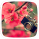 Plum blossom Theme by Heartful Theme