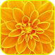 Yellow Wallpaper by Dextreme apps