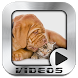 Funny Dogs Video Collection by MM Designs