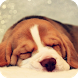 Beagle Live Wallpaper by GoldenWallpapers