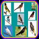 Novo Canto De Pássaros Brasileiros by ayyasy