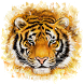 Tiger In This World