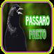 Novo Canto Pássaro Preto (Graúna) by ayyasy