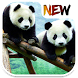 Panda Wallpaper