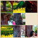 Image Puzzle by Dharm17
